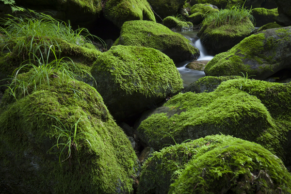栃寄沢の苔の岩
