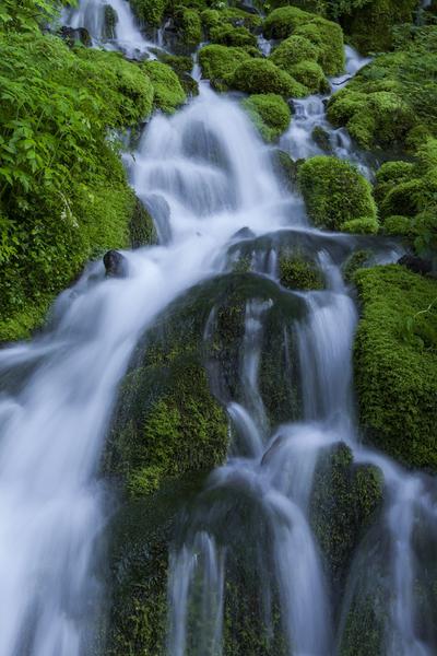 ブナ坂の清水、苔岩を滑る