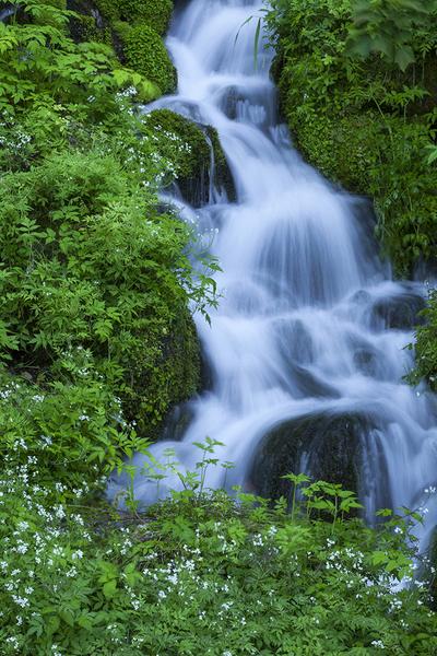 ブナ坂の清水の下流、白い花と緑に包まれた渓流