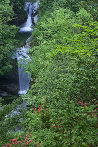 新緑とツツジ咲く神蛇滝