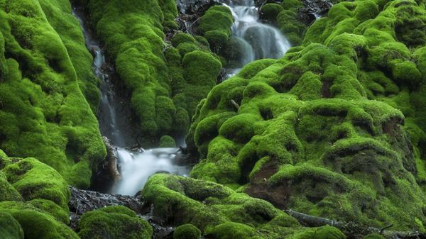 オログラ沢の苔の滝