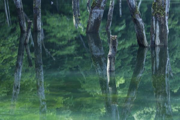 奥鬼怒の立ち枯れの木
