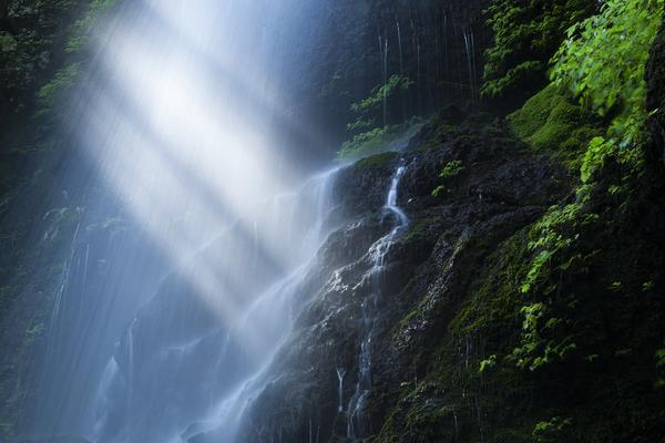 留春の滝に朝の光芒
