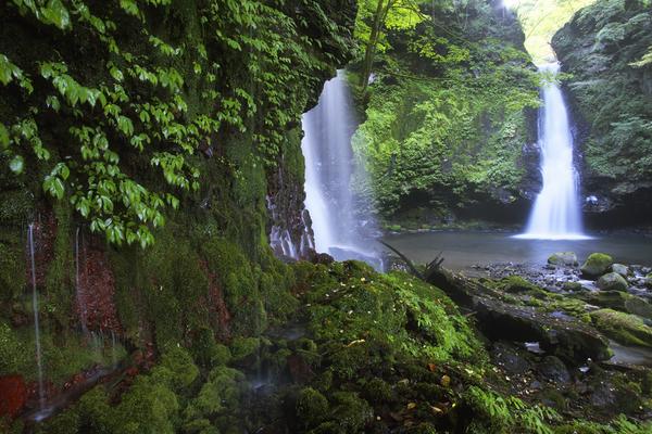 苔と緑と千峨滝