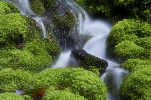 苔の清流、ブナ坂の清水