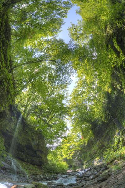 湯川渓谷を覆う新緑