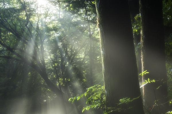 木漏れ日の朝