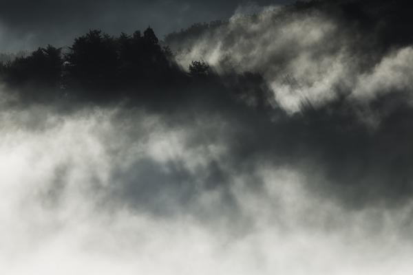 鎌倉山の雲海に煙る森