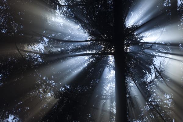 森の朝の光芒
