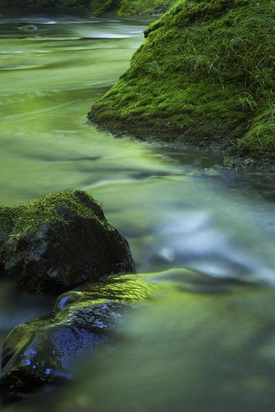 緑に染まる茗荷川