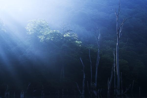 立ち枯れの木を照らす光芒