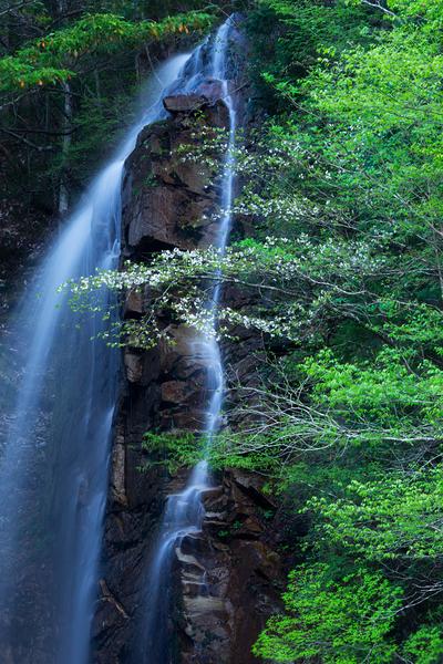 隠れ滝にヤマザクラ