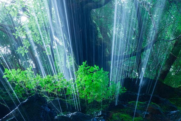 眞俣谷の無名滝を裏見