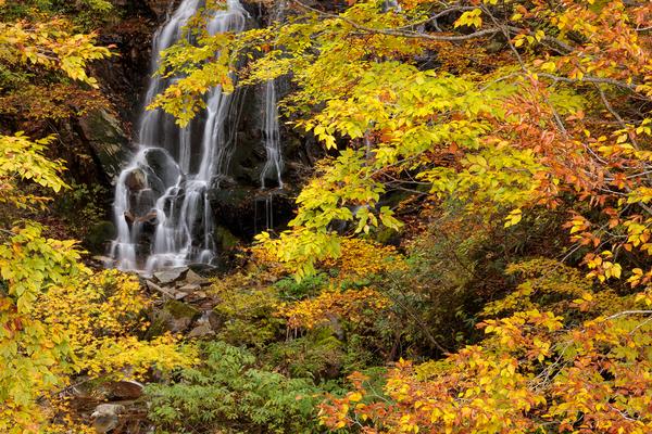 秋の芳沢不動滝