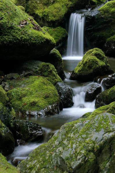 大岳沢の苔生した渓流